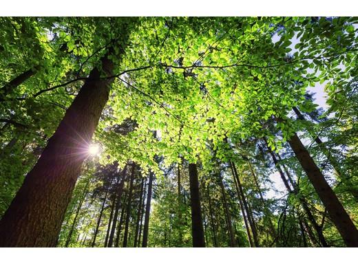 Ist es rotarisch, Bäume zu pflanzen?