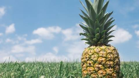 Alles Ananas