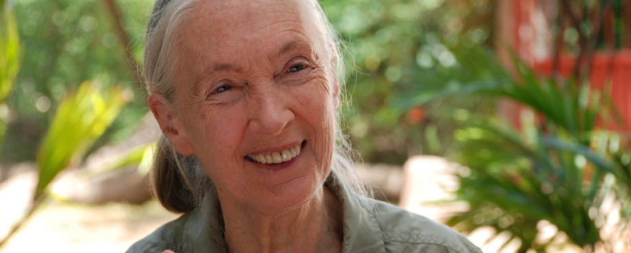 RI Convention 2013 - Jane Goodall in Lissabon