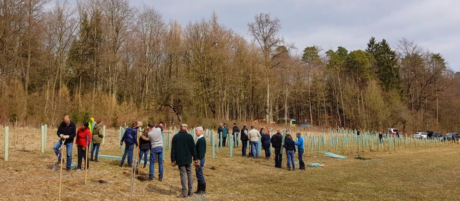 RC Forchheim, Baum, Bäume, Baumpflanzung, ERPOT, Every Rotarian Plants One Tree, Riseley