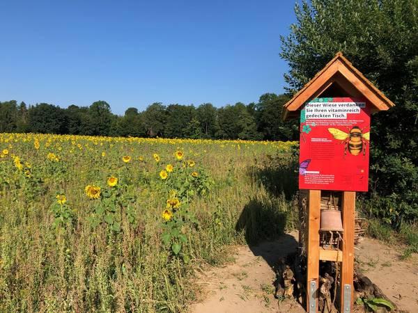 Mit Bienenweide ein Zeichen setzen