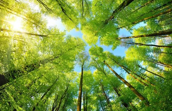 Neuer Schwerpunktbereich Umweltschutz