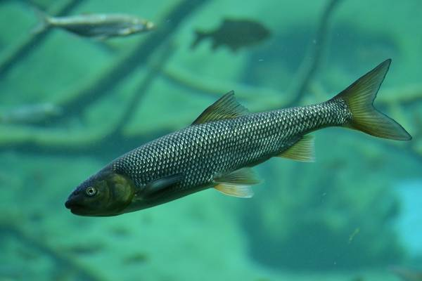 Kleine Fischkunde